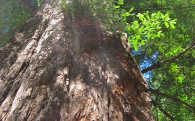 Bark – staying in touch