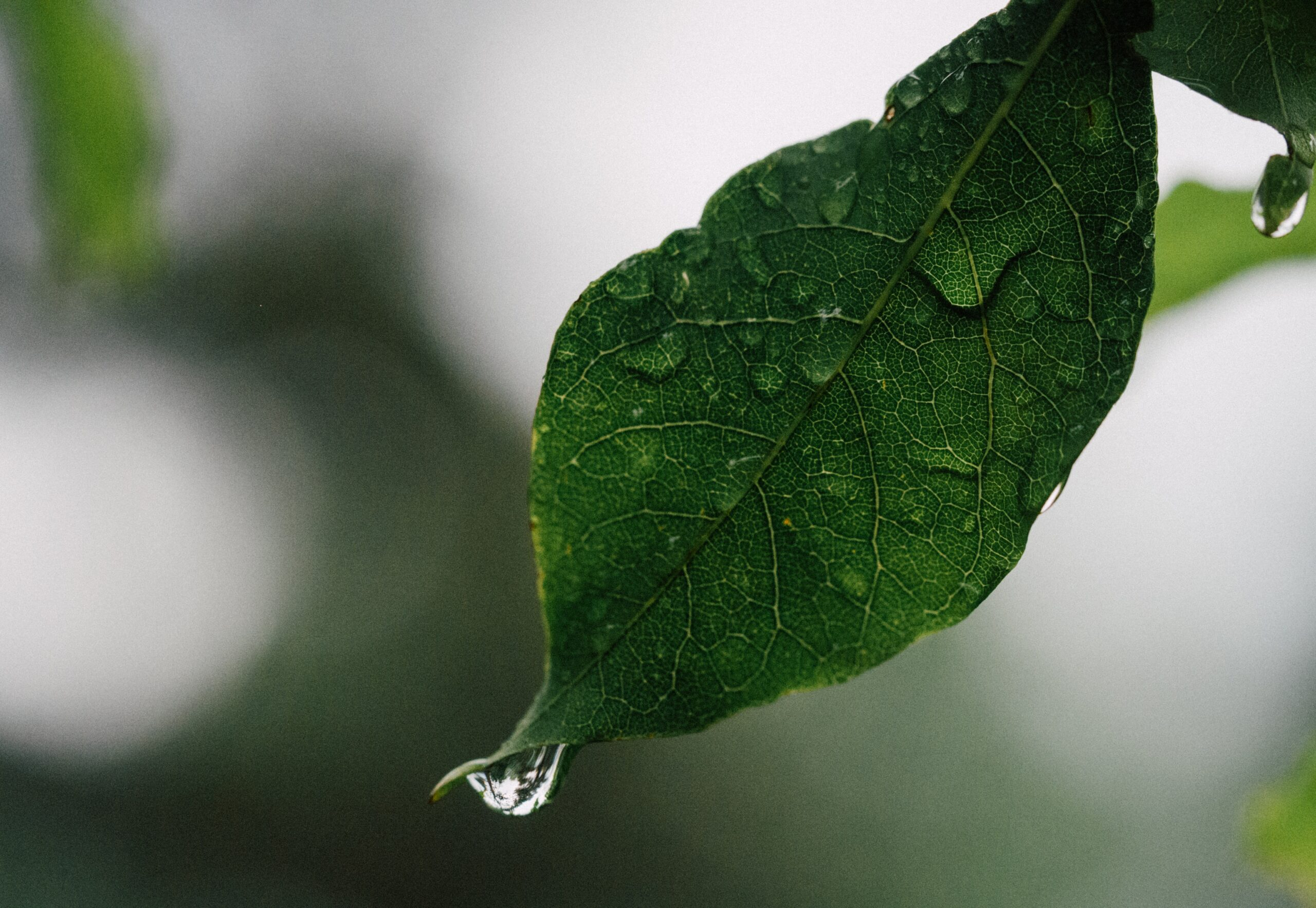 Rain – an invitation to wholeness