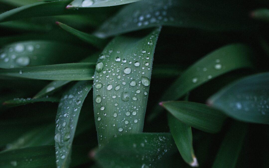 Rain and Rejuvenation