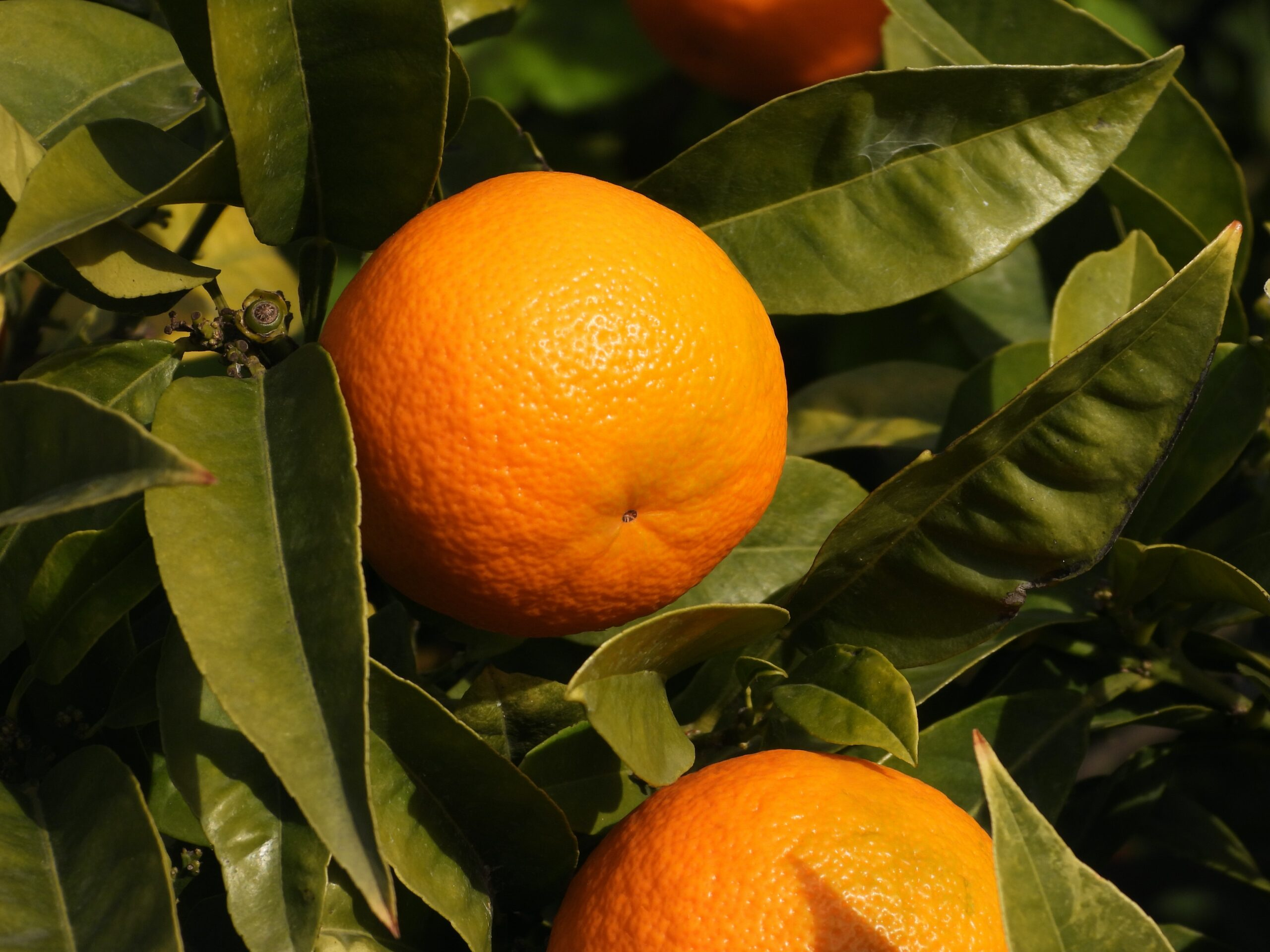Oranges & the gift of roundness