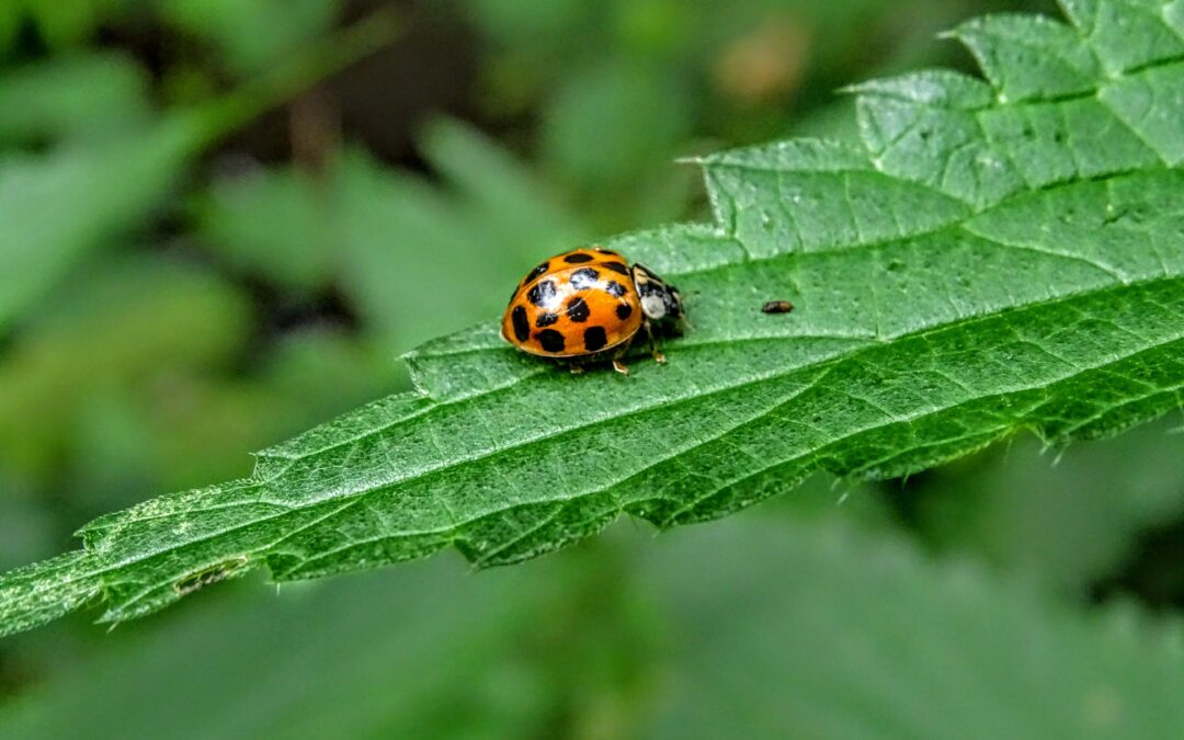 Ladybug – spark of joy in a grey world